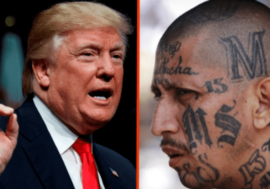 Donald Trump has held out MS-13 as an example of a broken immigration policy. But the reality is far more complex.