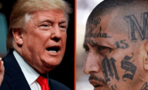Donald Trump and MS-13